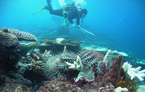 môi trường biển