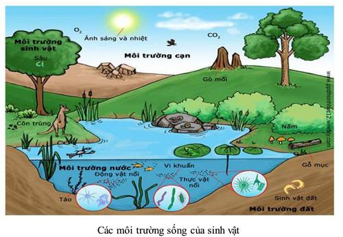 nhân tố sinh thái