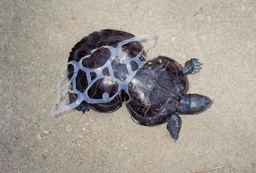 Hình ảnh ô nhiễm môi trường