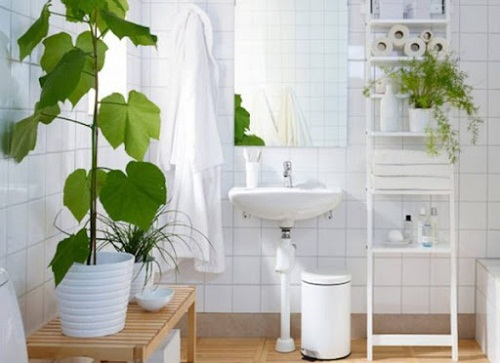 trồng cây trong nhà vệ sinh